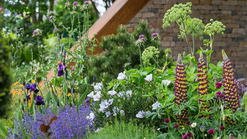 Vote for your favourite garden at rhs chelsea flower show Winner chelsea flower show 2017