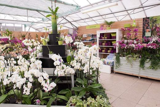 Orchids in the plant centre