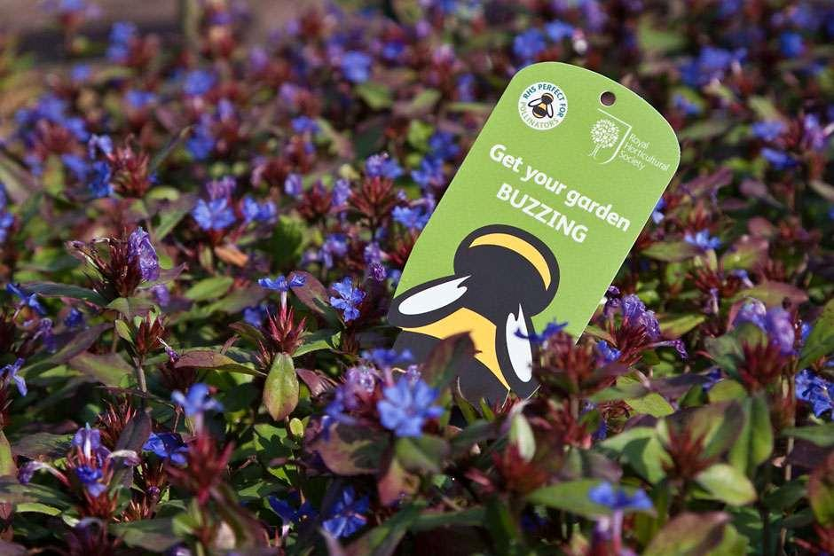 Plants for pollinators rhs home.