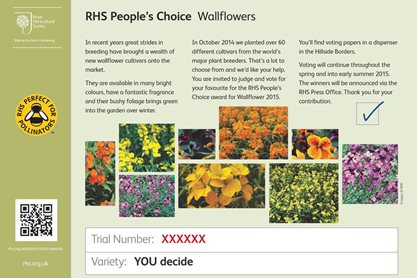 RHS People's Choice voting slip - wallflowers