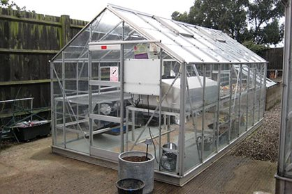 Its always worth the effort to keep your glasshouse clean