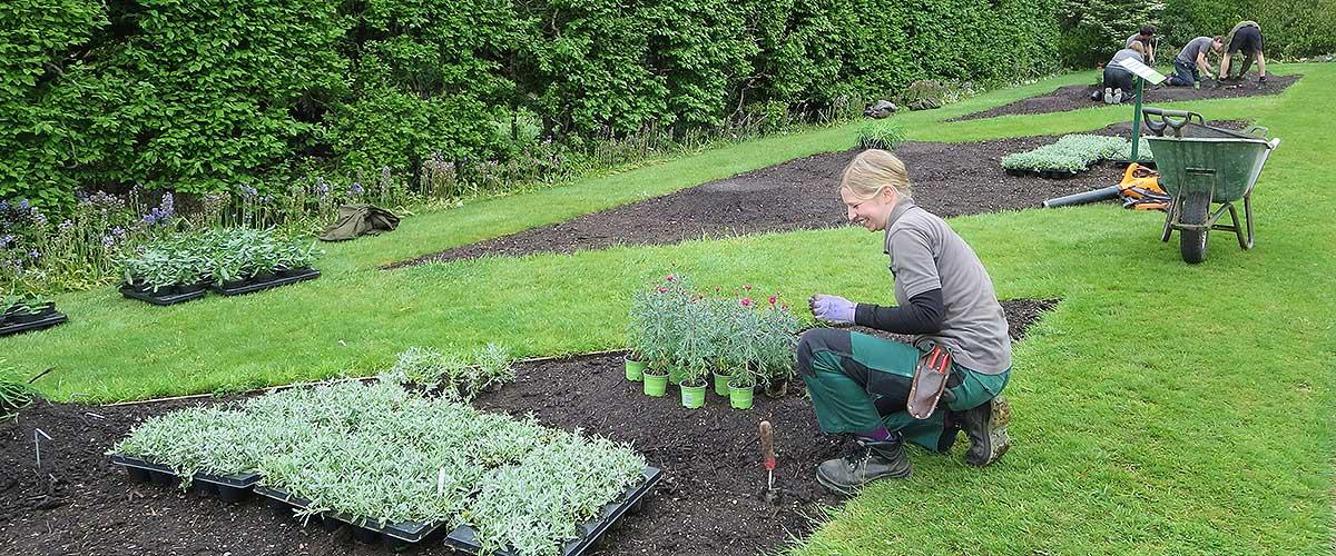 Trainee planting formal bedding
