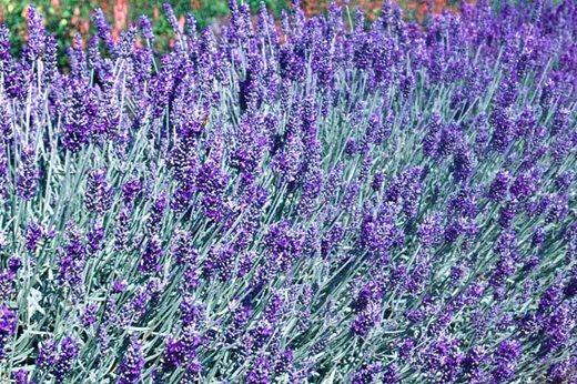 richard lavender - photo #37