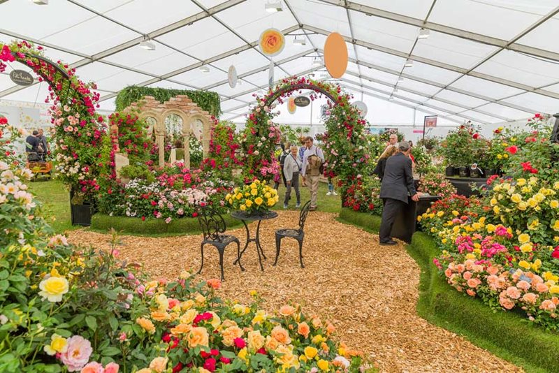 Peter Beales' display at the Festival of Roses 2017