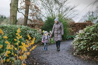 Wrap up and explore Wisley's beautiful Winter Walk