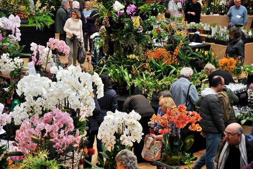 visitors at the orchid show