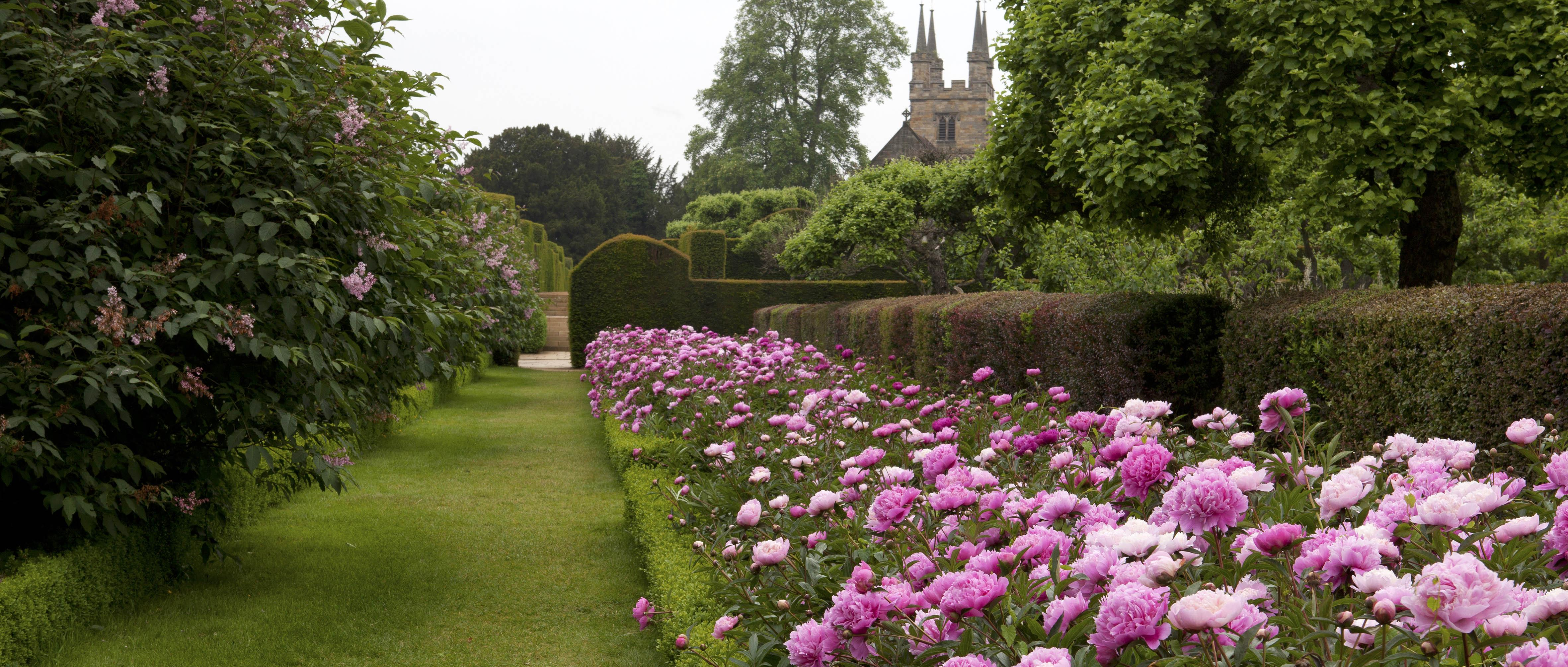 Peonies at Penshurst Place