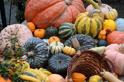 Display of  pumpkins and squashes
