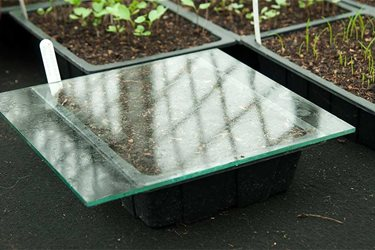seed tray under glass