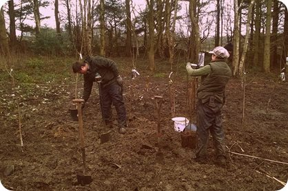 Planting out birches at RHS Garden Harlow Carr