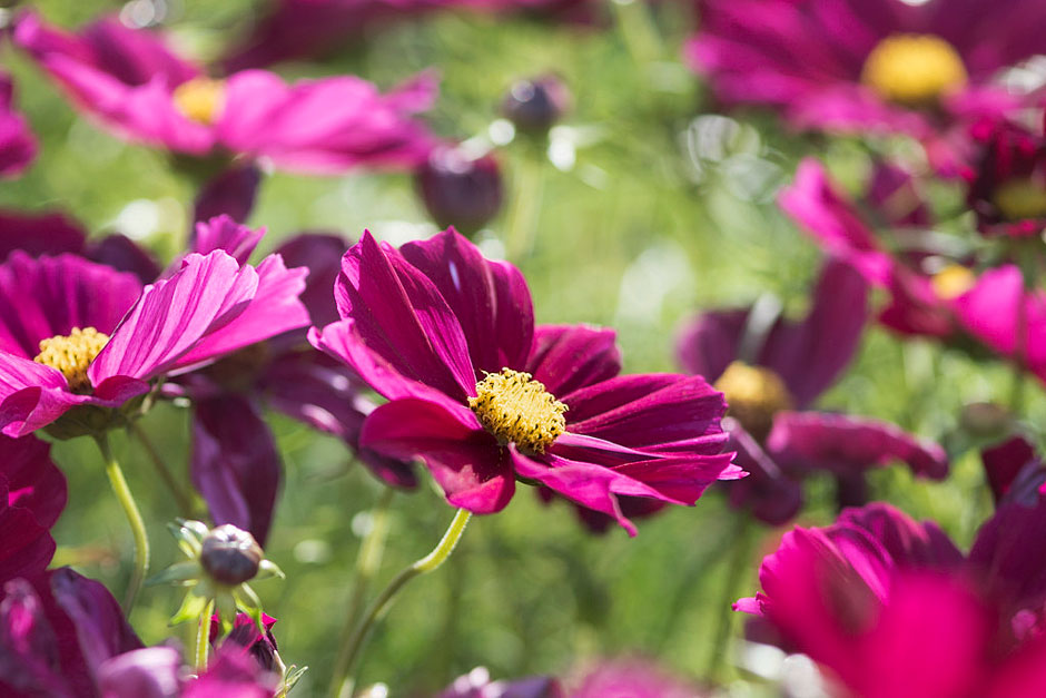Top 10 patio plants for bees / RHS Gardening