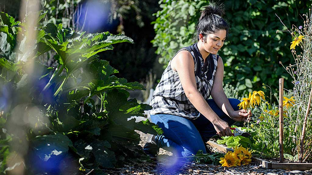 RHS horticultural training and qualifications / RHS Gardening