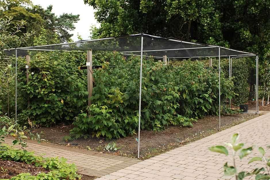 Fruit cages RHS Gardening