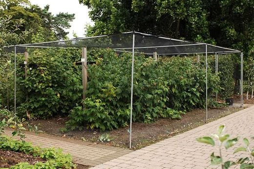 Fruit cages RHS Gardening