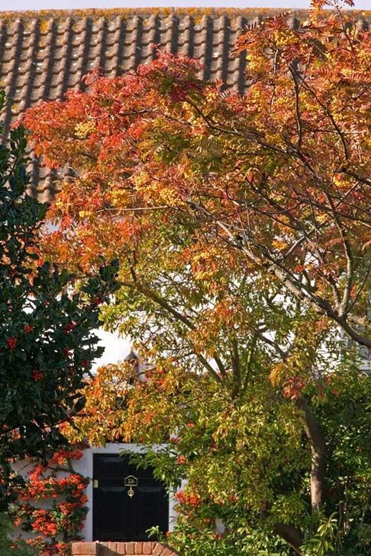 Top 10 flowering trees for small gardens rhs gardening for Great small trees for landscaping