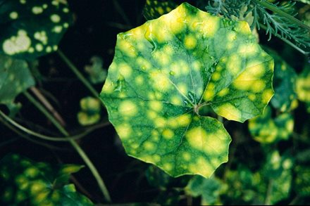 Finest flecked foliage - plantsman Graham Rice picks 10 AGM winners with mottled and splashed leaves