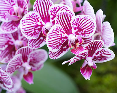 Top tips for growing orchids at home