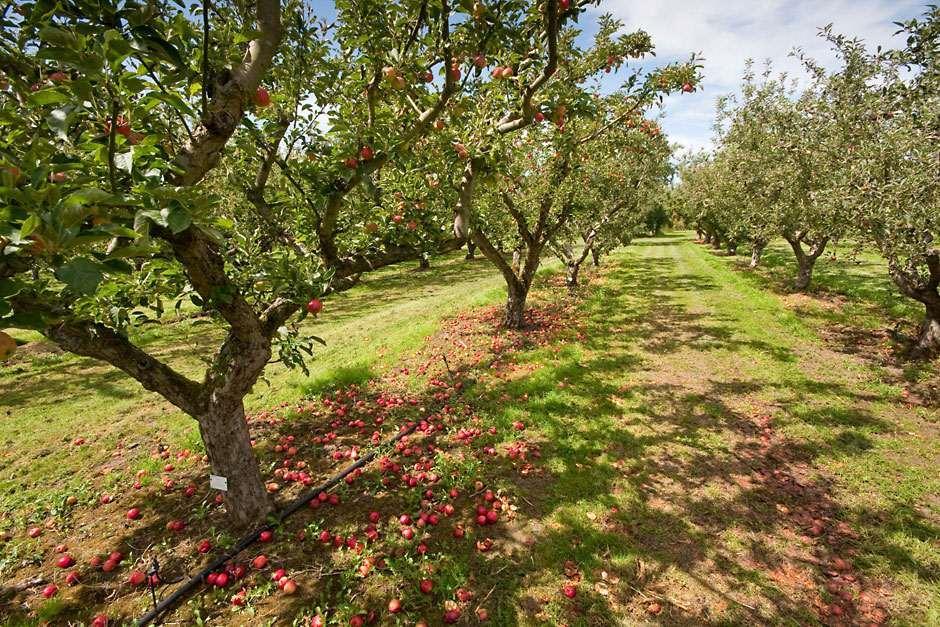 Fruit basics - positioning your fruit trees and bushes ...