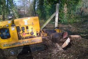 The stump grinder at work