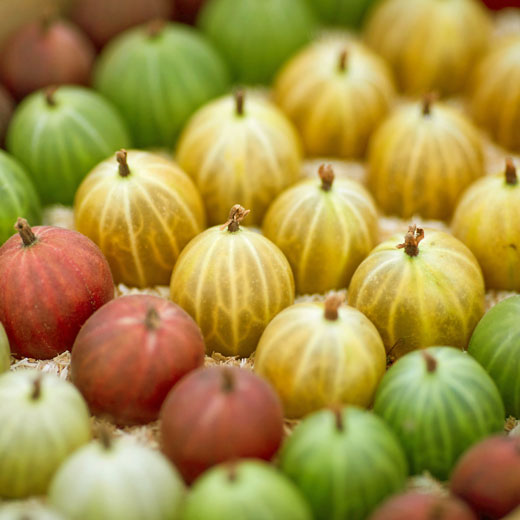 Gooseberry display