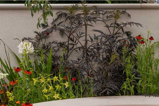 Hampton court palace flower show 2016 plants for small for Small garden trees rhs