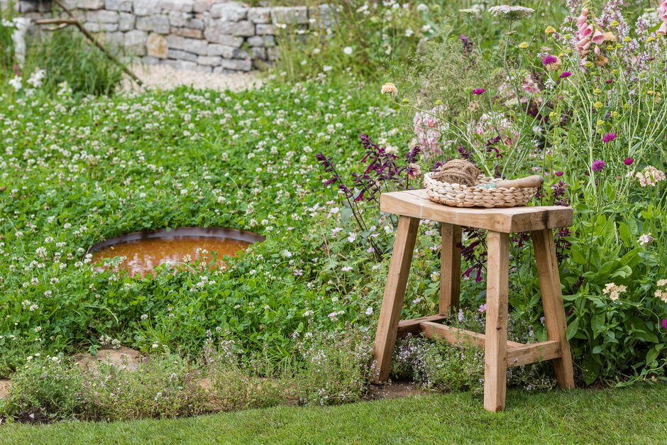 Rewild your garden with tips from Springwatch / RHS Gardening