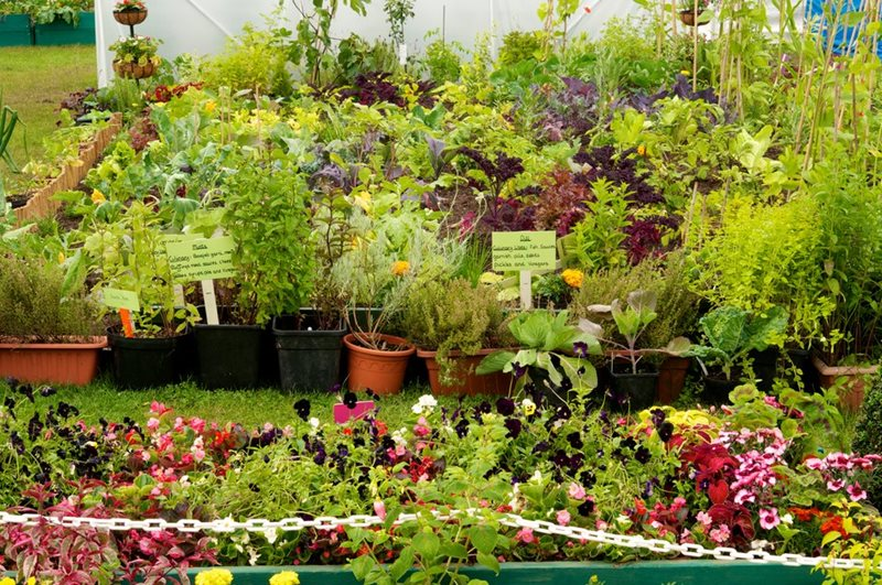 A collection of plants in an allotment-style display