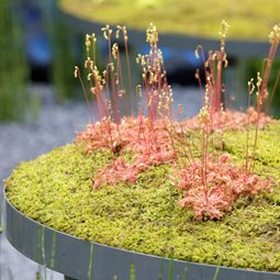 Plant a green roof