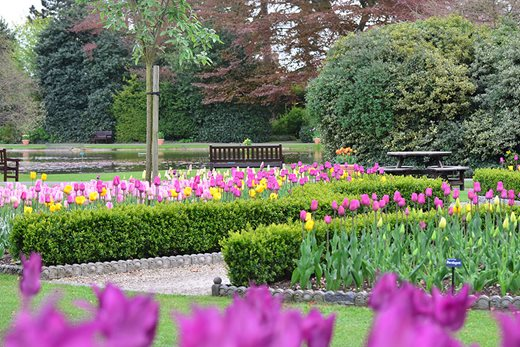 Tulips at Burnby Hall
