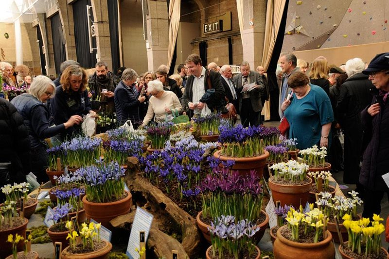 Displays of Iris at the 2016 show