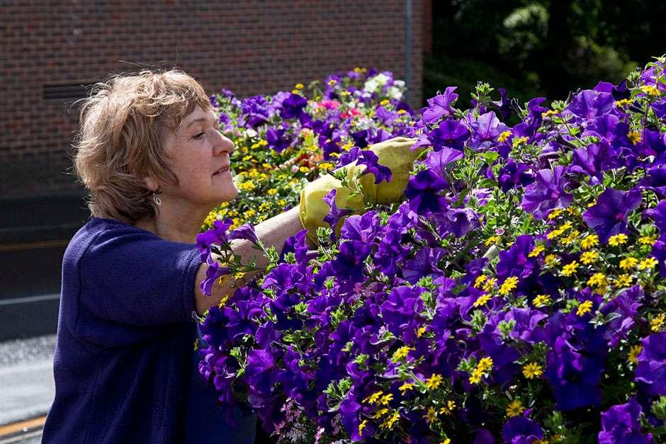 Volunteer deadheading flowers