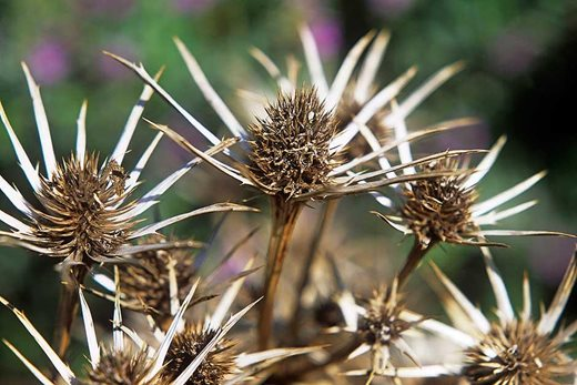 Seedheads are homes for wildlife in winter