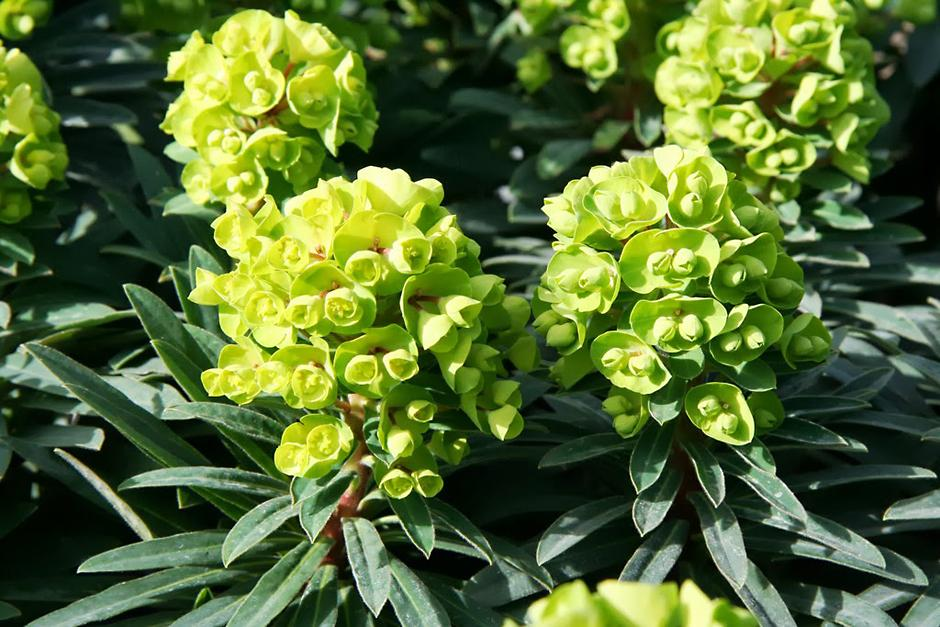 Help Advice Tips From The Rhs On All Kinds Of Plants Rhs Gardening