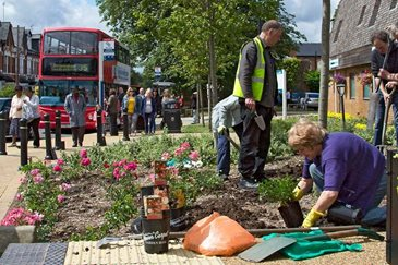 Volunteers planting roses in Kings Heath in Birmingham