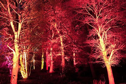 under tree lighting in winter