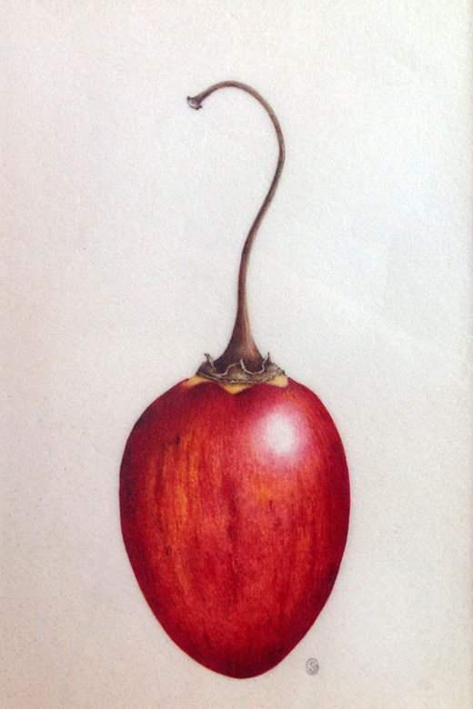 'Cherry' by Sarah Gould