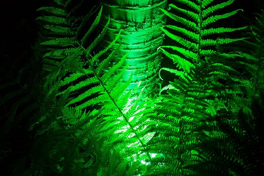 Illuminated fern