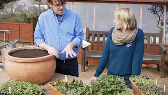 Nigel Slater Garden Nigel Slater Growing Salad –