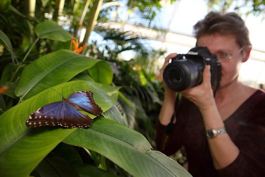 Woman photographing a butterfly