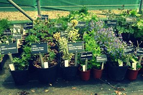 Plants accessioned and labelled