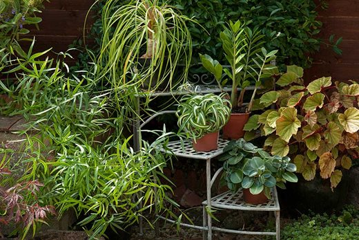 group of houseplants