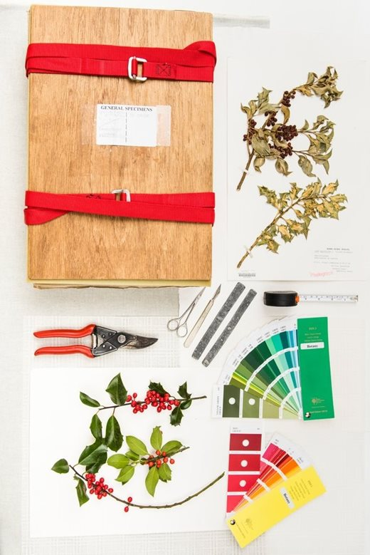 How To Press Plantake Herbarium Collections Rhs