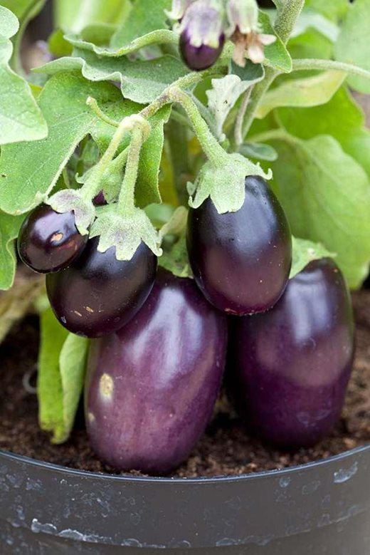 Getting started with vegetables | help & advice on where to plant vegetables / RHS Gardening
