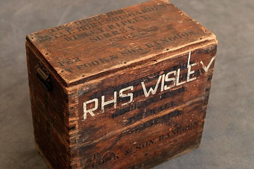 Wooden box used for transporting plant hunting specimens. The box is stamped with the address of 'The Director. Royal Horticultural Soc. Garden, Wisley'. It also carries the mark of T.Cook & Son Rangoon and the address of 'J C Williams at Caerhays Castle, Cornwall'.