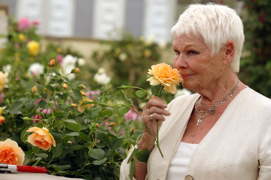 Dame Judi Dench poses with the David Austin rose named after her