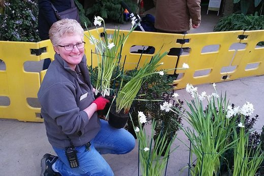 Sandra and her paperwhite narcissi
