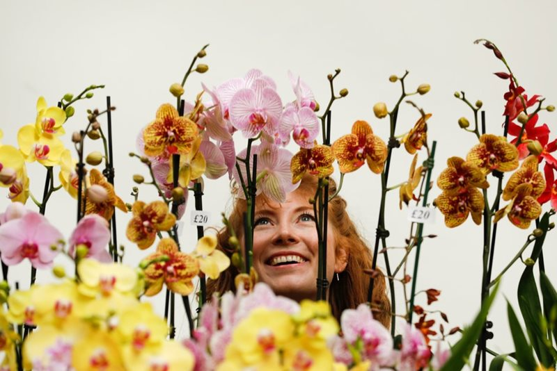 RHS Spring Launch and Orchid Show / RHS Gardening