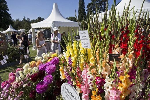Gladioli displays at the Wisley Flower Show