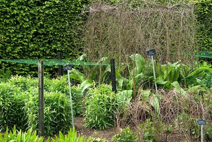 Carefully-staked perennials at RHS Garden Wisley (May)