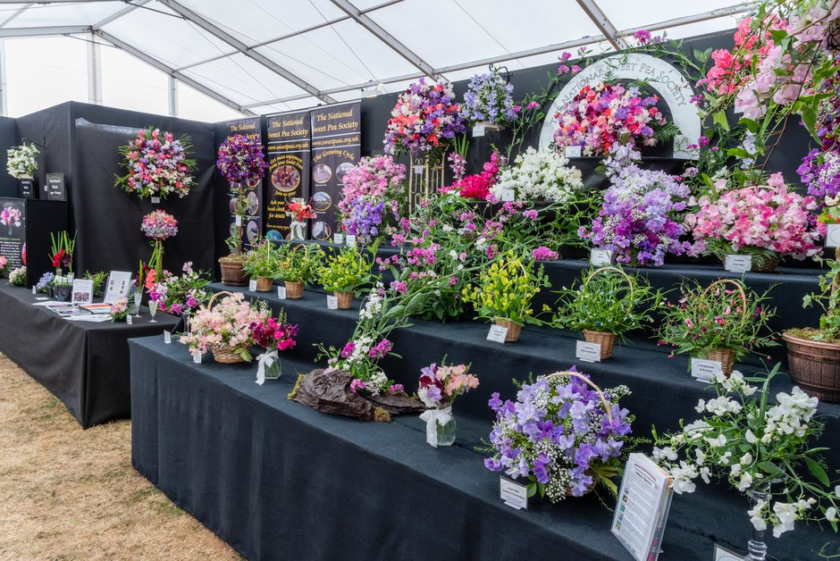 The National Sweet Pea Society's display